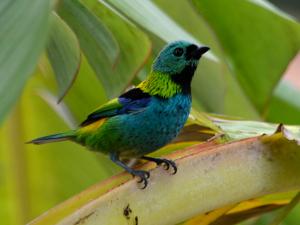 Ubatuba é referência mundial em observação de aves – Birdwatching