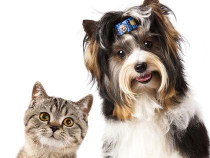 Prefeitura informa: cadastro para castração de cães e gatos segue aberto