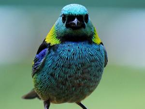 Setembro é o mês de Observação de Aves