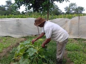 Prefeitura lança edital destinado à compra da agricultura familiar para a alimentação escolar