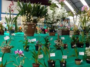 Associação Orquidófila de Ubatuba organiza II Exposição de Orquídeas