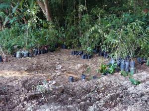 Regional Sul inicia recuperação de área degradada