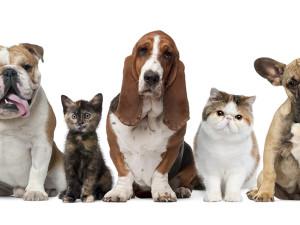 Cães e Gatos podem ser vacinados contra raiva em Ubatuba