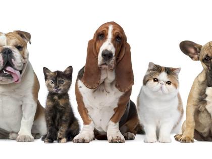 Prefeitura lança edital de eleição do Conselho de Bem-Estar Animal
