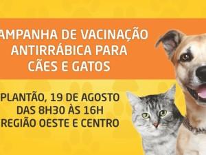 Campanha de vacinação contra a raiva em cães e gatos continua