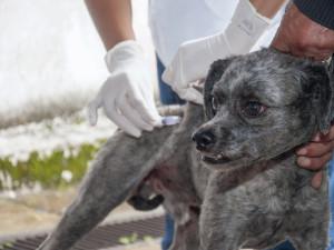 Mais de 11 mil cães e gatos de Ubatuba já foram vacinados contra a raiva