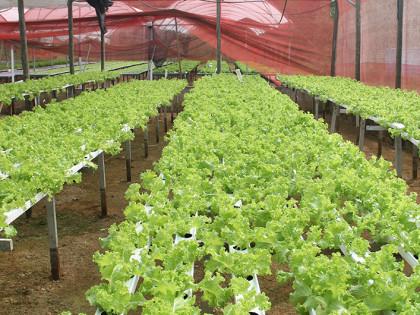 Agricultura Familiar é tema de encontro em Ubatuba