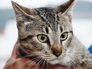 Vigilância em Saúde inicia cadastramento de animais para castração