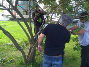 Ubatuba participa de curso sobre poda na arborização urbana