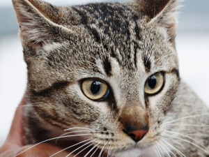 Prefeitura de Ubatuba retoma castrações de cães e gatos já inscritos