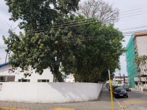 Poda de árvores em escolas de Ubatuba serão realizadas no fim de semana