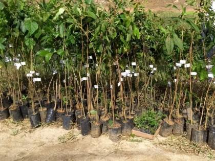 Ubatuba comemora 384 anos com maior plantio realizado em um único dia