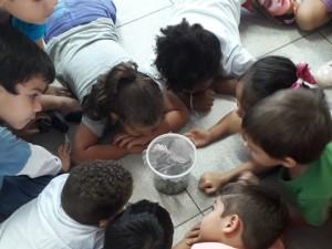 Experiência sobre ciclo de vida da borboleta encanta alunos da EMEI Idalina Graça