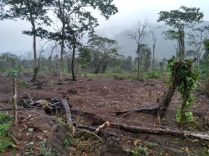 Secretaria de Meio Ambiente, Defesa Civil e Guarda Civil autuam dois por crime ambiental