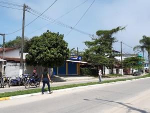 Secretaria de Meio Ambiente convida para plantio de árvores no Perequê-Açu