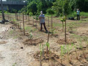 Secretaria de Infraestrutura e voluntários promovem plantio às margens do Rio Tavares